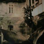 Lithprint Calla