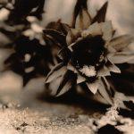 Lithprint Cactus